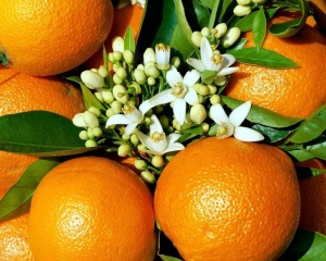 """Эфирное масло """"Апельсин"""" (Бразилия)"""